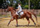 Sklep jeździecki: w poszukiwaniu najlepszego kasku